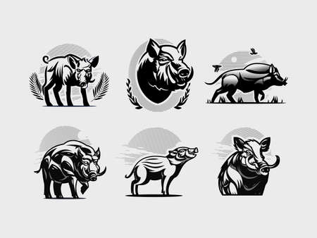 Collection of wild boars. Vector illustration. Wild boar, piglet, hog, tusks