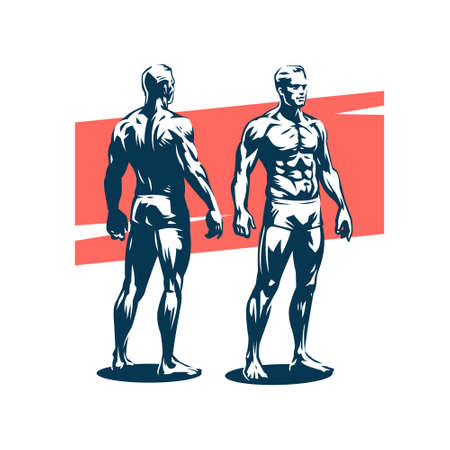 The figure of a muscular man. Anatomy of a man. Male front and back views. Stylized vector illustration. Stock Illustratie