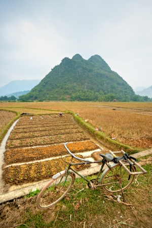 Norvietnamitas Paisaje photo