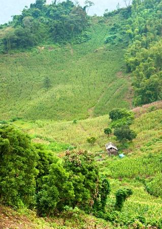 North Vietnamese Landscape. photo