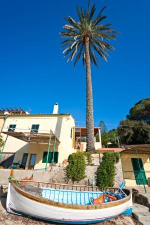 blue ray: Palm and Dramatic Sky  Elba island  Italy