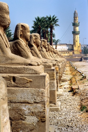 luxor: Sphinxs outside the Temple of Luxor, Egypt.  Stock Photo