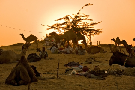 Camel Fair at sunrise, Pushkar, Rajasthan, India  Stock Photo - 17654316