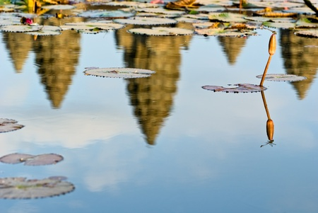 Reflection of Angkor Wat Temple at sunset, with Dragonfly. Siem reap, Cambodia. photo