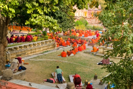 bodhgaya: Monks praying under the bodhy-tree, Mahabodhy Temple,  Bodhgaya, India