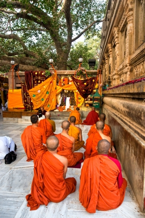 banian tree: Monks praying under the bodhy-tree, Mahabodhy Temple,   Bodhgaya, India