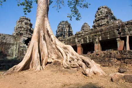 khan: Big Tree at Preah Khan Temple, Cambodia.