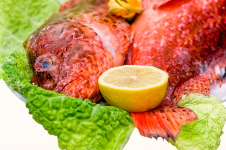 Fresh fish with with cabbage and lemon  Isolated on white Stock Photo - 17670148