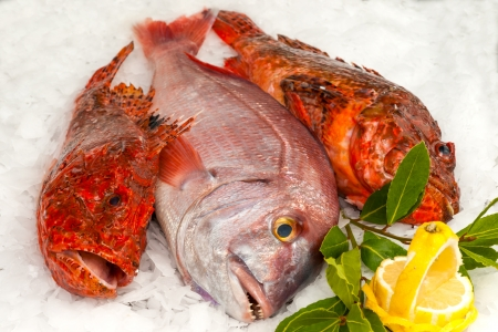 the dorada: Seafood on ice at the fish market