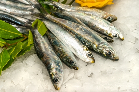 Fresh Sardines and Anchovies on ice  Stock Photo