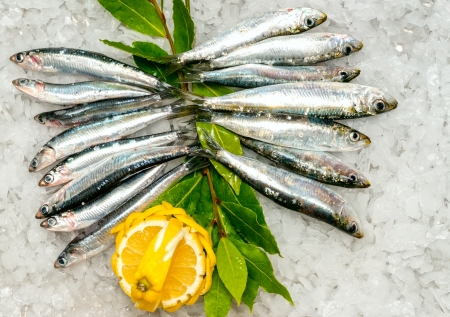 sardines:  Fresh Sardines and Anchovies on ice  Stock Photo