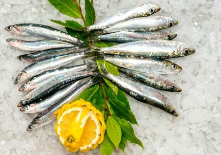 sardinas: Sardinas frescas y Anchoas en el hielo
