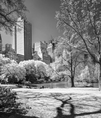 Central park, New York City  USA