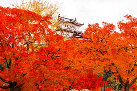 ninja ancient: Himeji Castle, also called White Heron Castle, in autumn season, Japan. Editorial