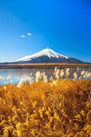 kawaguchi ko: Mount Fuji reflected in Lake Yamanaka at dawn, Japan.
