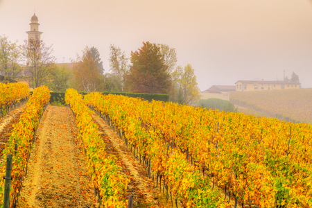 Langhe vineyards of Piedmont in autumn, Italy Stock Photo