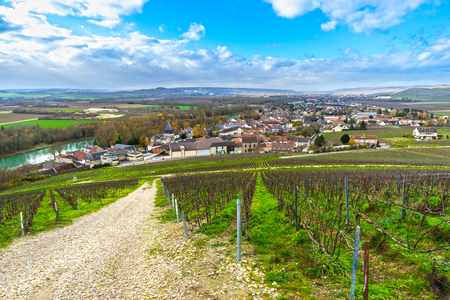Champagne vineyards in the village of Mareuil sur ay, Epernay, Marne, Champagne region, France
