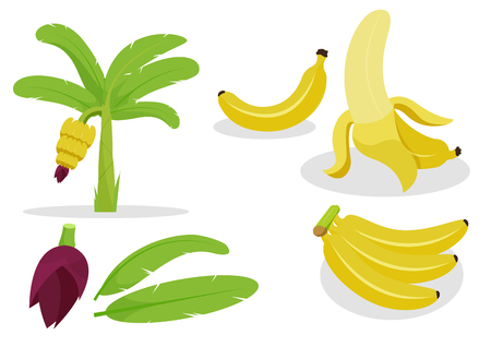 Banana flat cartoon  set for description story.Isolate on white background.Group for easily use. Illustration