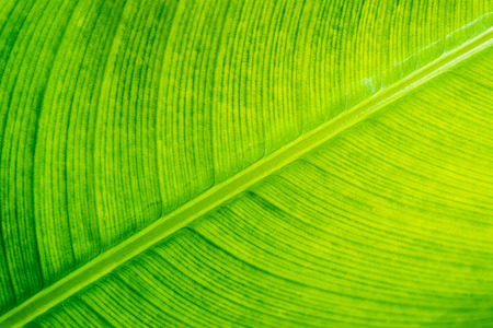 Texture of leaf with yellow light for conversation and organic background.