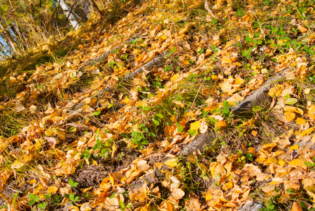 stone stairs covered fallen autumn foliage