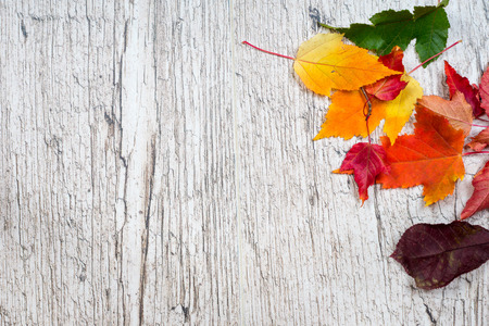 colorful autumn leaves on bleached oak wooden textured planks Zdjęcie Seryjne