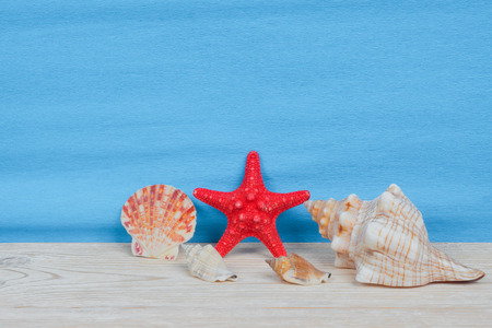 red starfish and sea shells, summer holidays concept