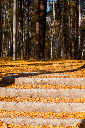 concrete stairs covered fallen foliage in autumn forest