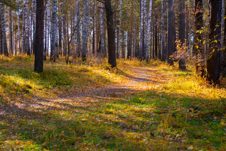 curved walking path in wild autumn forest, relax season scene