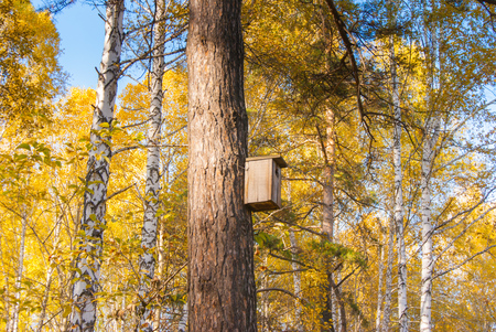 pine tree with birdhouse in yellow autumn forest