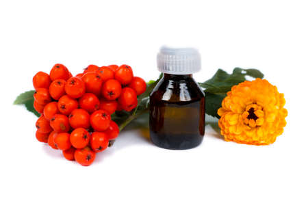 rowan berries and calendula essential oil in small glass bottle, isolated on white background