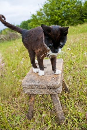 moggi: An image of cat on the stool