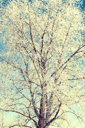 An image of tree covered by a snow in winter time Stock Photo - 16034404