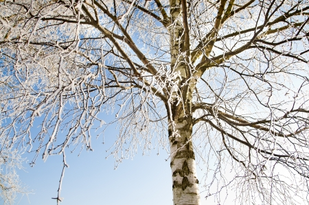 An image of tree covered by a snow in winter time Stock Photo - 16034438