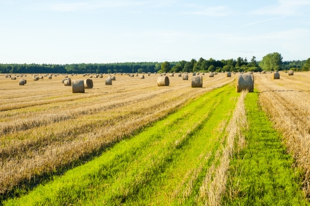 An image of straw bales on harvested field photo