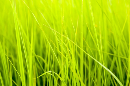 An image of Fresh green grass photo