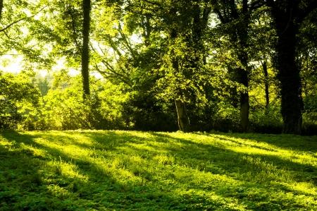 Een beeld van Bos in de ochtend met zonnestralen