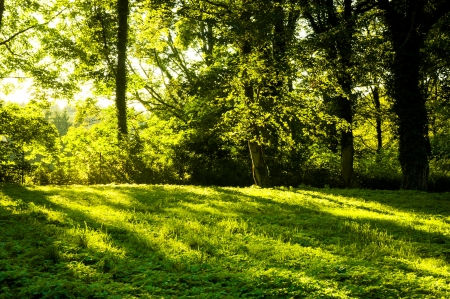 An image of Forest in the morning with sunrays Standard-Bild