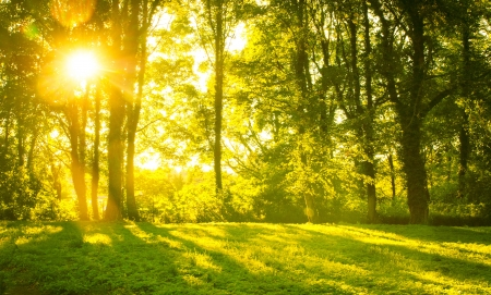 beautiful woodland: An image of Forest in the morning with sunrays Stock Photo