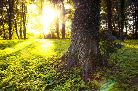 An image of Forest in the morning with sunrays photo