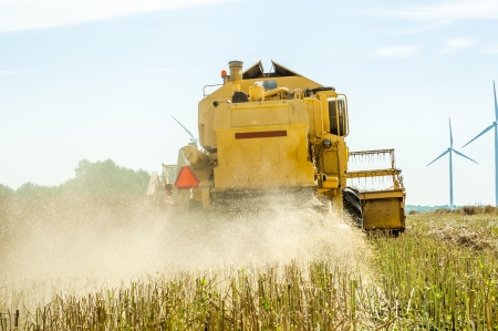 An image of combine harvesting rape photo