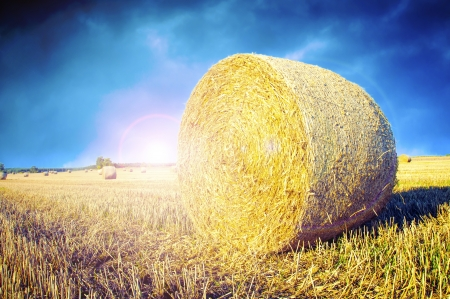 An image of straw bales on harvested field Stock Photo - 16235943
