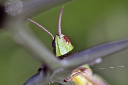 An image of macro of a bug  photo
