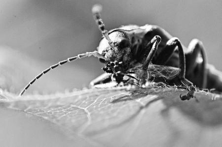 Una imagen de macro de un insecto photo