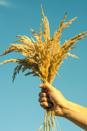 An image of dried grass Stock Photo - 16328307