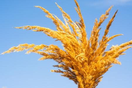An image of dried grass Stock Photo - 16328928