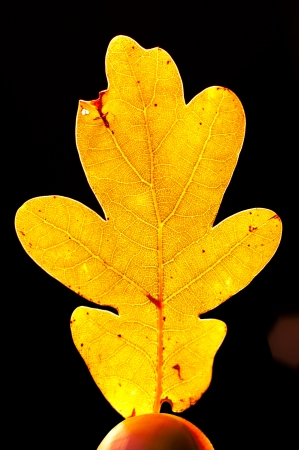 An image of leaf close up photo