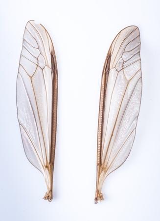 een beeld van mug vleugels