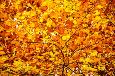 An image of autumn leaves photo