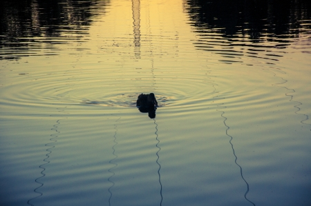An image of Duck at the lake photo
