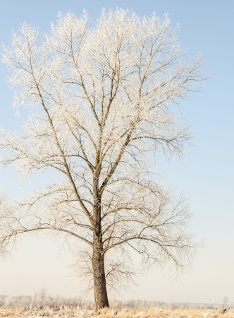 an image of winter scenery, trees covered by snow Stock Photo - 16643671